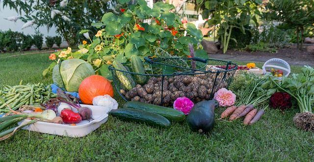 Cultiva tu propia comida ecologica