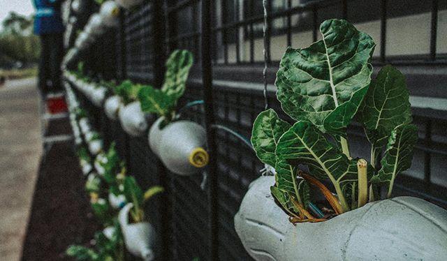 botellas pet permacultura y reciclaje del hogar para el huerto