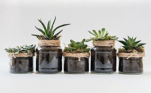 frascos reciclados para el jardin o huerta