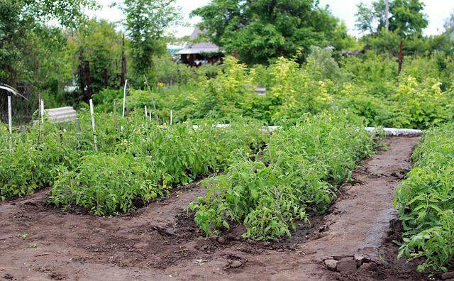 Recicla de tu hogar a la huerta o jardín