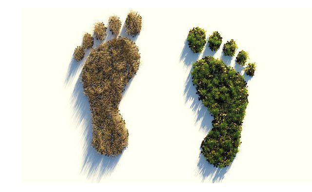 Reduce tu huella de carbono con estos consejos