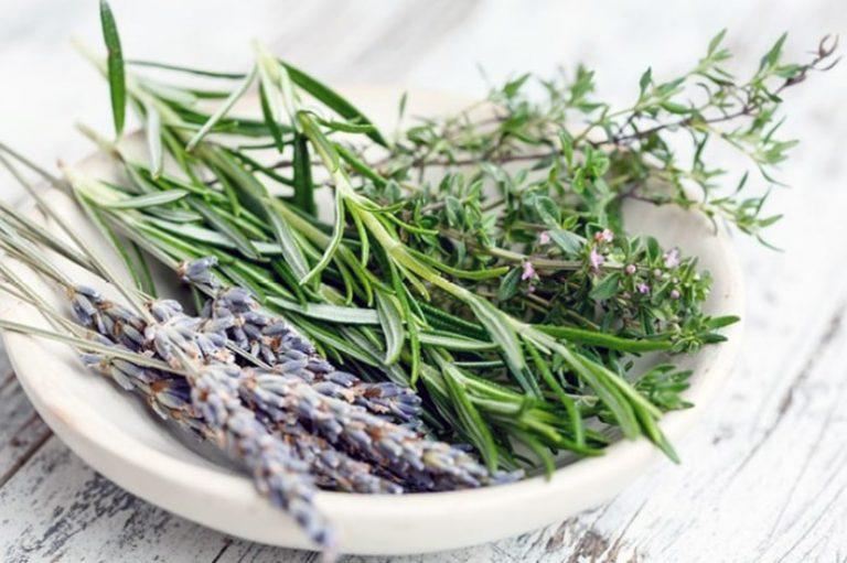 Hierbas medicinales que podemos cultivar en casa