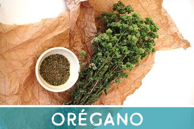 Orégano - hierba medicinal