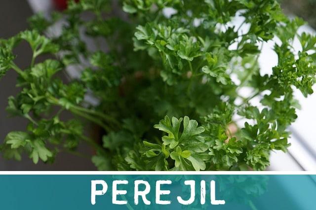 Perejil - hierbas medicinales