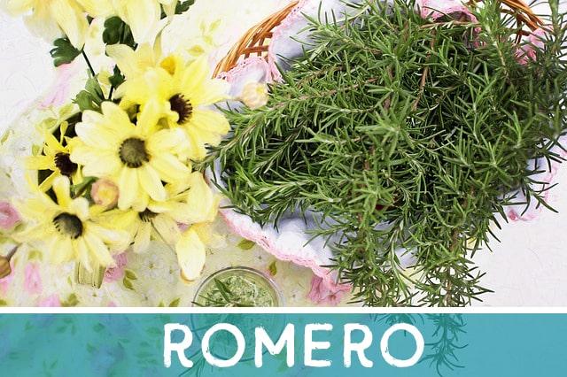 Romero - hierba medicinal