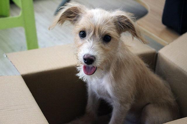 casa para mascotas hecha de cartón