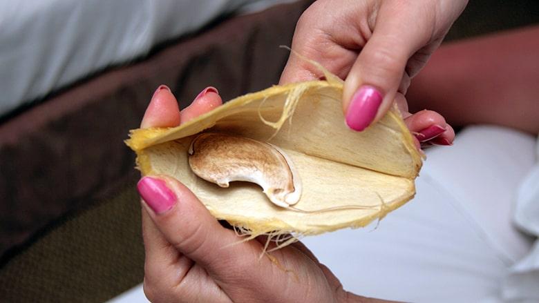 semilla de mango