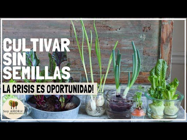 cultivar sin semillas