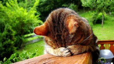 mantener a los gatos alejados del jardín naturalmente