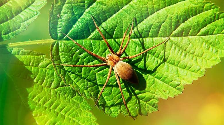 Plantas que repelen las arañas